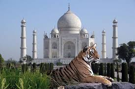 Tiger Tour & Golden Triangle