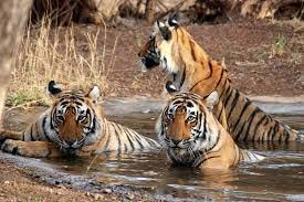 Great Indian Wildlife Tour